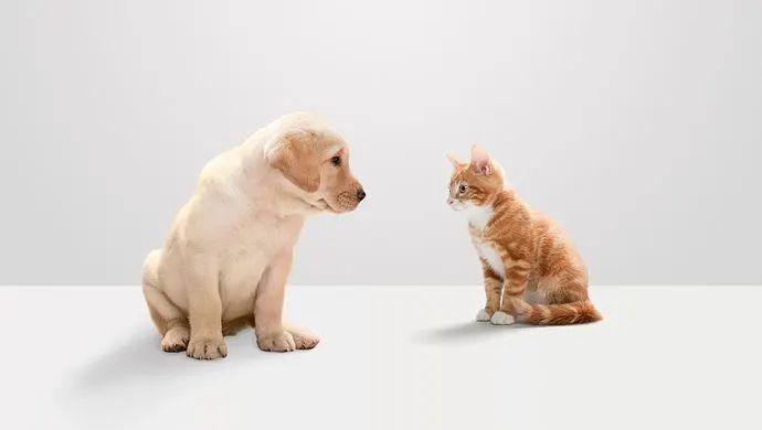 Can cats and dogs at home transmit new coronavirus?